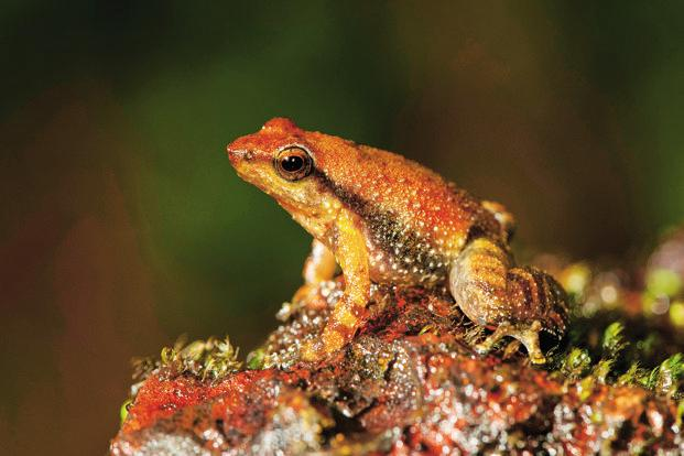 In an apocalyptic, post-dinosaur world, frogs rose to be king