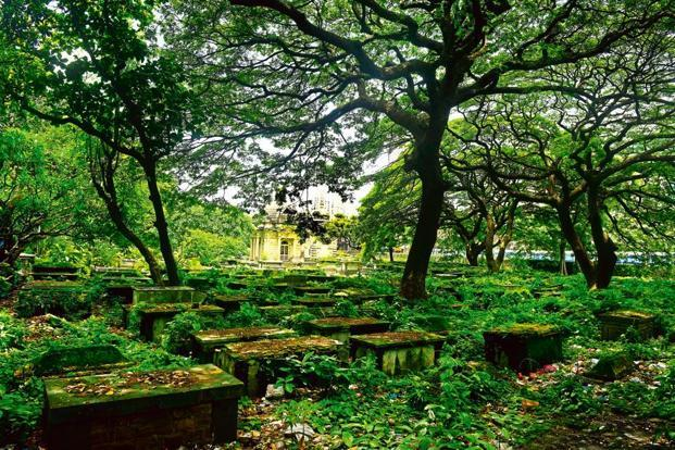 Century-old trees at the Jewish cemetery, Chinchpokli. Photographs by Abhijit Bhatlekar/Mint