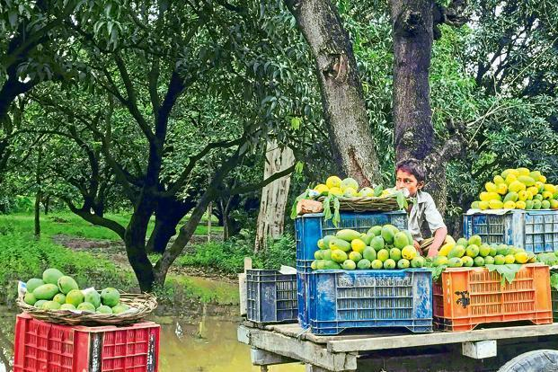 A cart selling mangoes at the entrance to Noor Bagh. Photographs by Paroma Mukherjee.