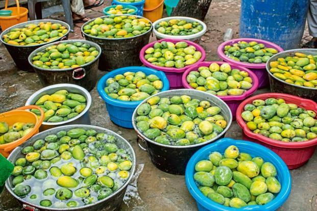Mangoes from the orchard kept soaked in tubs in the courtyard of Salma Public School.