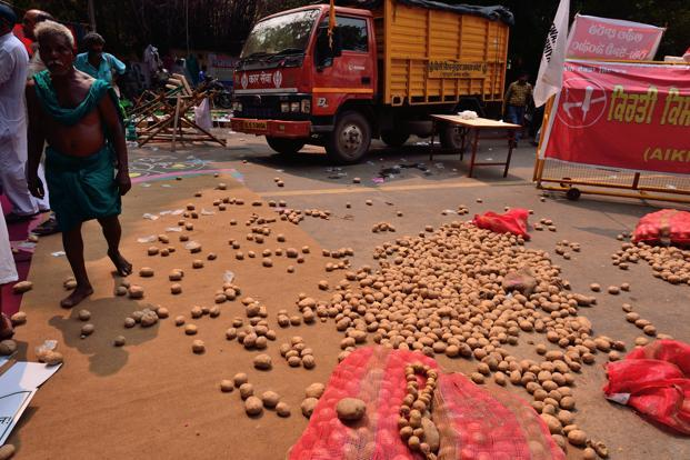 Potato farmers from UP throw the tuber on the road at a protest at Jantar Mantar in New Delhi on Wednesday. Photo: Pradeep Gaur/Mint