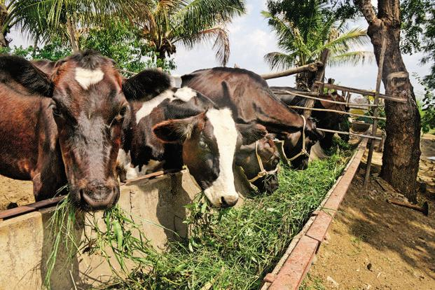 Court asks Indian government to denounce cow vigilantes