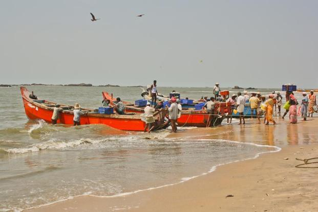 Fisherfolk unloading the catch of the day, Thottada beach. Photographs: Ganesh Vancheeswaran