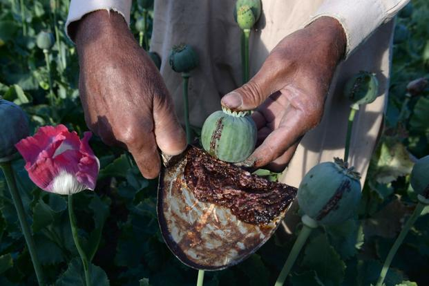 In 2016 Afghanistan, which produces 80% of the world's opium, made around 4,800 tonnes of the drug bringing in revenues of $3 billion. Photo: AFP
