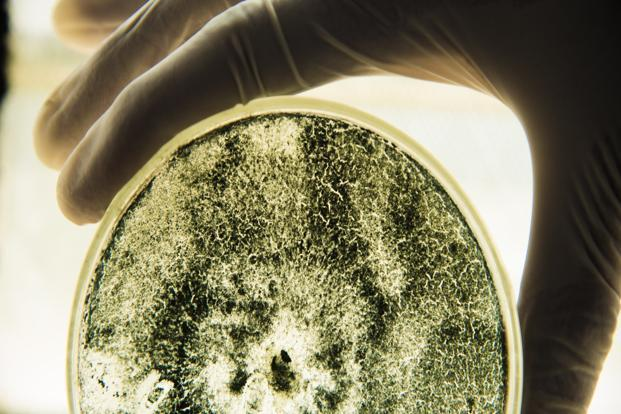 NHS Scotland alerted over emerging drug-resistant fungus