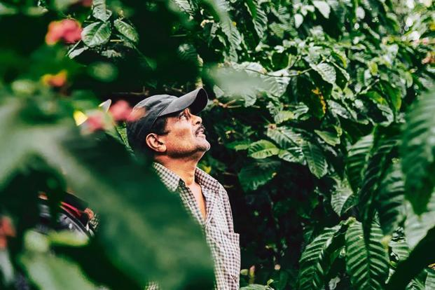 A coffee estate farmer. Courtesy Krish Bhalla
