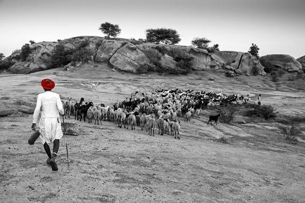 Shepherd with his flock. Photo: Gustasp and Jeroo Irani