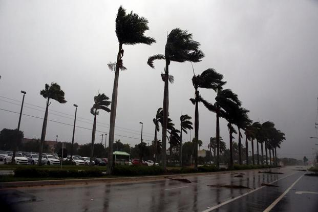 Winds lash palm trees as Hurricane Irma strikes in Boca Raton, Florida, on Sunday. Photo: AFP