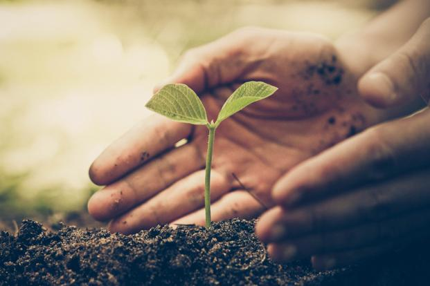 Image result for Tree Planting Istock