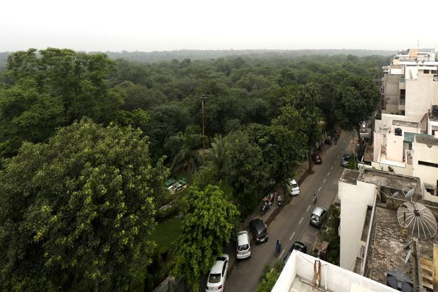 A file photo of Delhi's ridge area. Experts said in a report that 'the ridge forests and its surrounding areas should be preserved and improved as lung of the mega-city'. Photo: HT