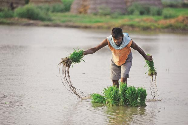 The centre has come out with a four-volume report suggesting ways to boost farmers' income, said Radha Mohan Singh. Photo: Mint
