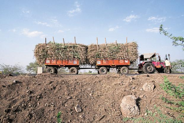 In the 2016-17 season, sugarcane was grown over a substantially low acreage of around 6.3 lakh hectares, around 37% less than Maharashtra's average sugarcane cultivation acreage of 1 million hectares. File photo: Mint