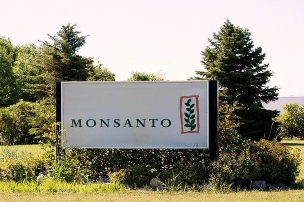 Monsanto has been at loggerheads with cotton seed companies and the government in India over how much it can charge for its GM cotton seeds. Photo: Reuters