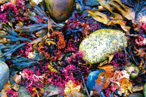 Maine is known for its sustainable seaweed harvesting farms. Photo: iStockphoto