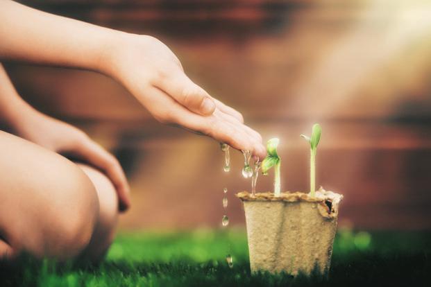 The Essentials of Plantations  – 101