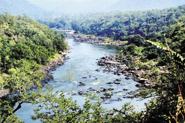 Industry plays a very important role in this and is an important stakeholder in river revitalization. Tree-based products such as fruits have a shorter shelf life, so industry must invest in value addition and in creating supply chains to make it viable for the farmer. Photo: Hemant Mishra/Mint