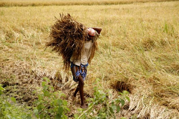 After wholesale prices of crops fell sharply over October, the Madhya Pradeh government could end up spending more than the Rs4,000 crore estimated earlier to compensate the farmers. Photo: Bloomberg