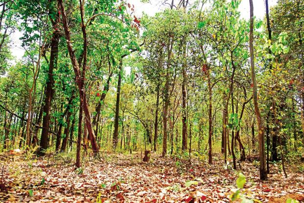 According to norms under the Forest Conservation Act, compensatory afforestation must be undertaken on non-forest land in the same district as the diverted forest. Photo: Indranil Bhoumik/Mint