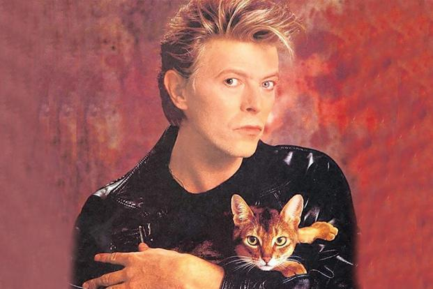 Is 'Cat Person' actually about David Bowie? Photo: @meowbox
