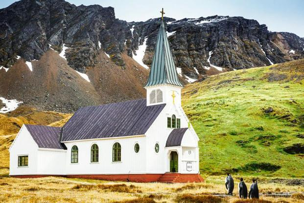 All Dressed And Ready For Church'. Three king penguins approach the only church in Grytviken, South Georgia Island, appearing to be headed for services. Photo: Carl Henry/Houston, US