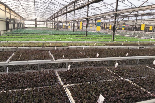 A nursery at the horticulture centre of excellence in Karnal, Haryana. So far, 20 centres of excellence are functioning in different states under the Indo-Israeli Agriculture Project and five more will be operational by next month. Photo: Israel Embassy