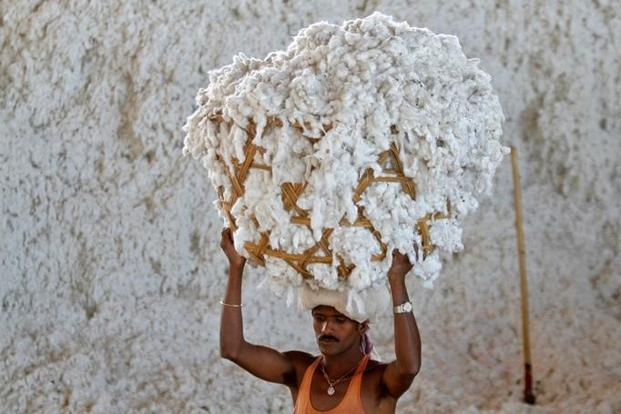 India cotton traders cancel export deals in pivot to local market: association chief