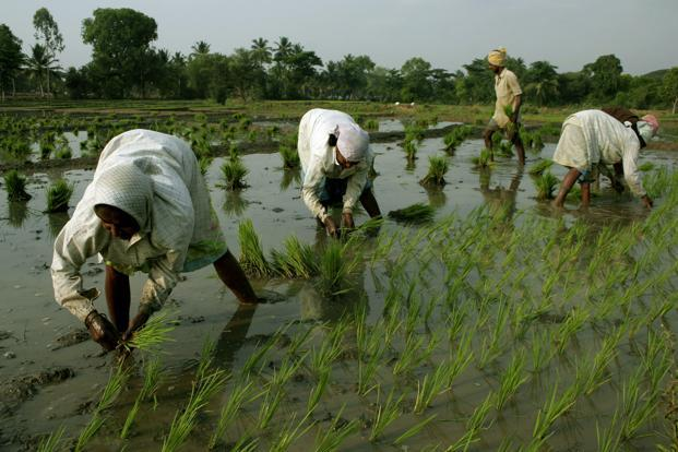 The panel's recommendations come in the backdrop of continued farm distress and the government's signal that the forthcoming Union budget will put forth solutions to address the problem. Photo: Bloomberg