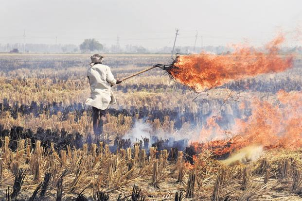 Govt is also looking at technologies to address agricultural waste (stubble management) to find an alternative to crop burning. Photo: HT