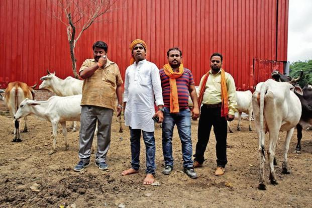 'Gau rakshaks' with cows they claim to have saved in Agra. Photo: Reuters