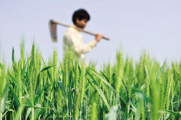 Image Agriculture rural india: focus on non-agriculture sector - livemint