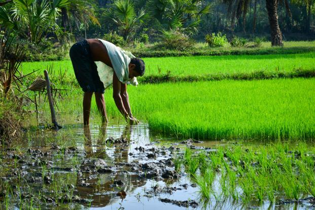 What the government has also misread is the nature of the rural distress which is no longer restricted to agriculture. Photo: Aniruddha Chowdhury