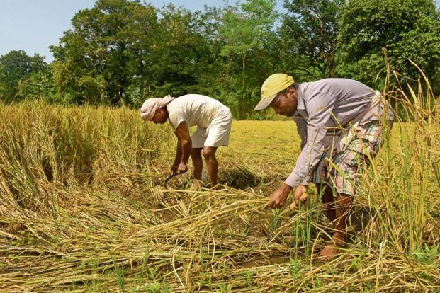 The government has announced a 50% increase in minimum support prices (MSP) for the coming kharif crop that could lead to a higher deficit. Photo: Abhijit Bhatlekar/Mint