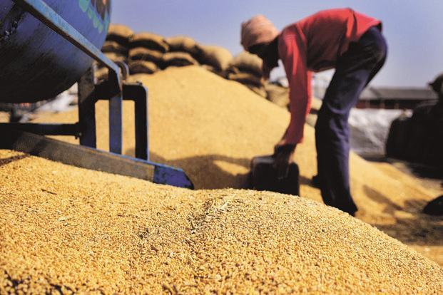 Wheat production target has been kept at 97.50MT for 2017-18 crop year. Photo: Mint