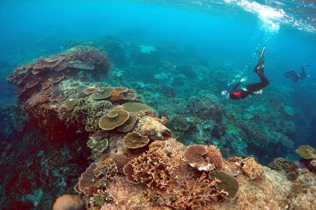 Coral reefs at risk of dissolving as oceans get more acidic