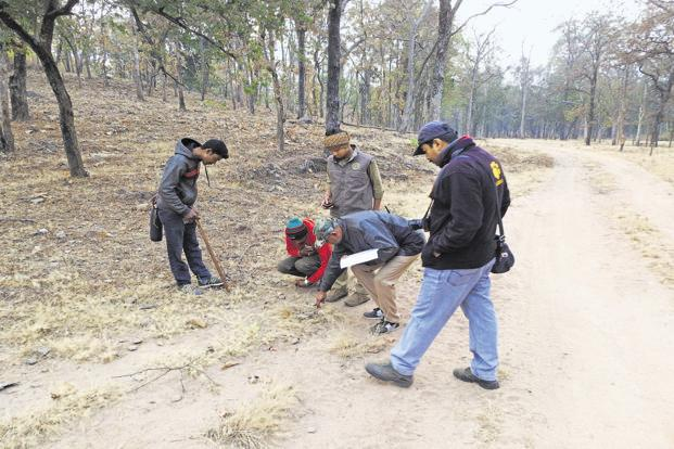 Forest officials and volunteers with the All India Tiger Estimation 2018 team conducting the carnivore track and sign survey at the Pench tiger reserve. Photo: Ananda Banerjee/Mint