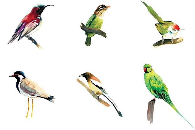 Birds In Your Backyard an illustrated guide to the birds in your backyard - livemint