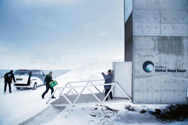 Seeds being taken to the vault at Svalbard. Photo: AFP