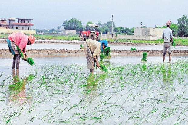The total economic loss to agriculture could be many times higher— last year's Economic Survey noted that India incurs losses of about Rs62,000 crore due to extreme weather events. Photo: Ramesh Pathania/Mint