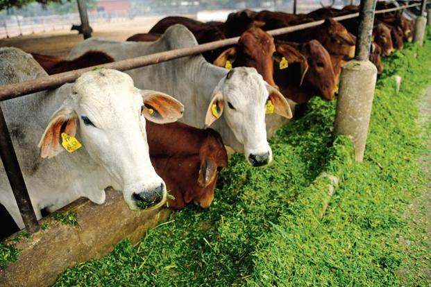 Farmers and dairy owners use oxytocin drugs to boost milk production and increase the size of vegetables. Photo: Pradeep Gaur/Mint