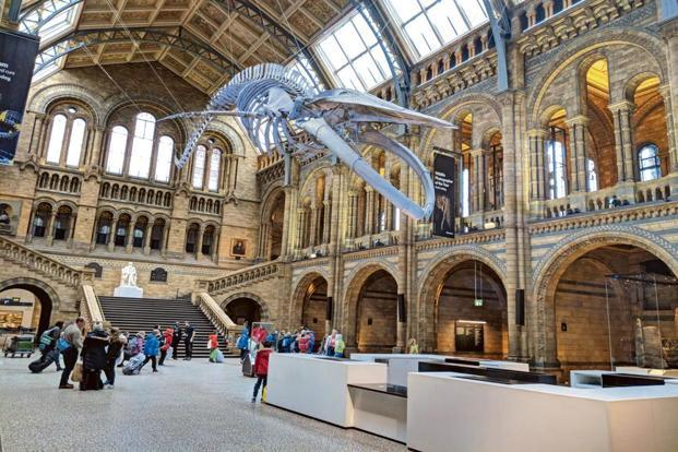 A blue whale skeleton at the Natural History Museum. Photo: Shreya Sen Handley