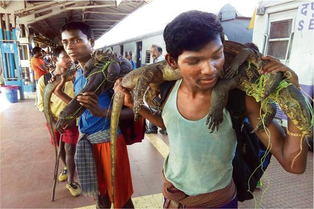 Hunters with monitor lizards at the Panskura railway station, West Bengal, in 2016. Photo courtesy Human and Environment Alliance League