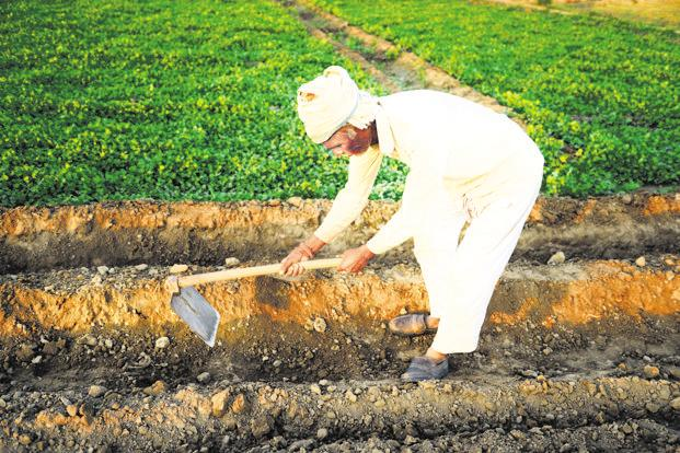 We need to shore up the quality of livelihood in agriculture to keep our demographic dividend economically engaged. Photo: Ramesh Pathania/Mint