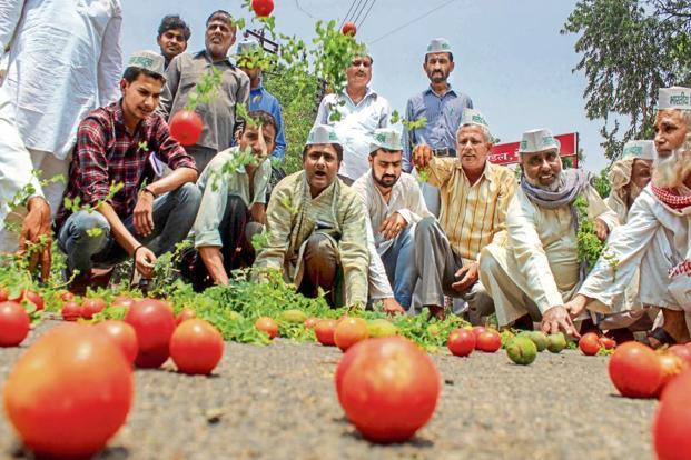 Farmers are demanding better prices for their crops and farm loan waiver. Photo: PTI