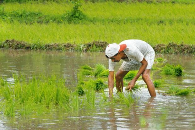 Representational image. The study, sponsored by NABARD, stressed the need to recalibrate crop choices by taking into account yield per unit of water applied, instead of measuring productivity per unit of land. Photo: Mint.