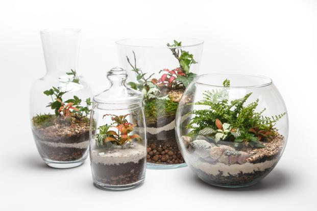 Brighten up your dull work desk with an easy-to-make terrarium