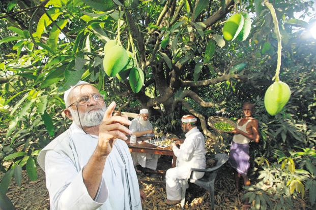 Kaleem Ullah Khan at his orchard in Malihabad. Photo: Hindustan Times