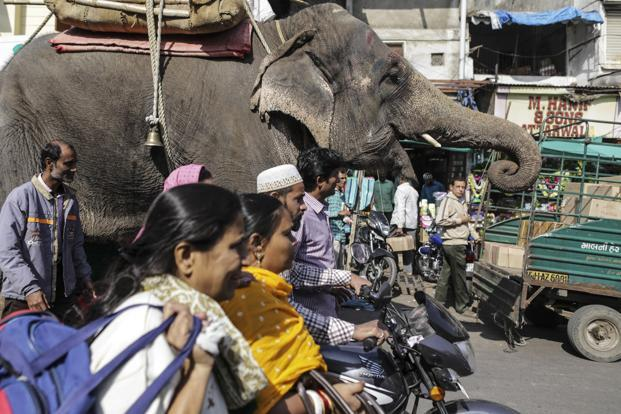 Indian economy was described by Ranil Salgado, the IMF's mission chief for India, as an elephant starting to run, with growth forecast at 7.3% in the fiscal year. Photo: Bloomberg