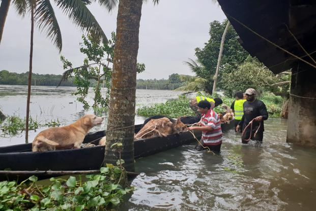 Rescued dogs in Kottayam. Photo: Nishanth Ravi