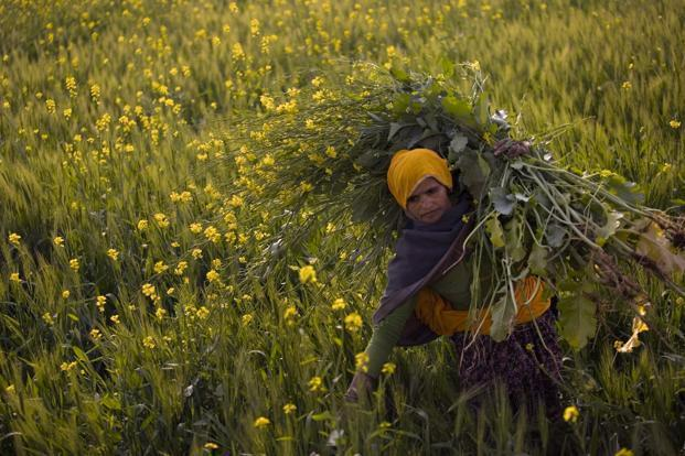 China does away with ban on Rapeseed Meal Imports from India