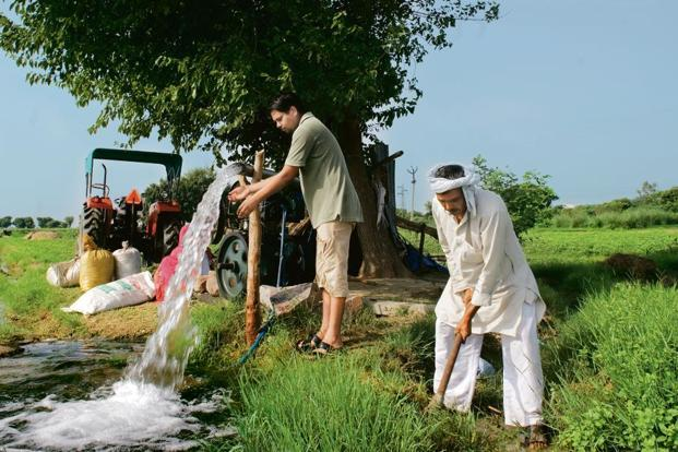 Government encourages farmers to produce water-intensive crops like rice and sugarcane through increased minimum support prices. Photo: Mint